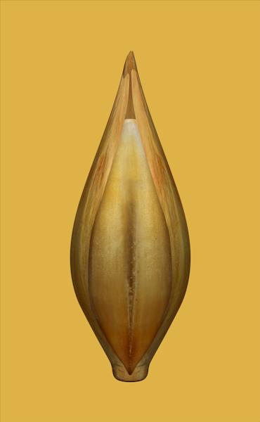 Barley animation
